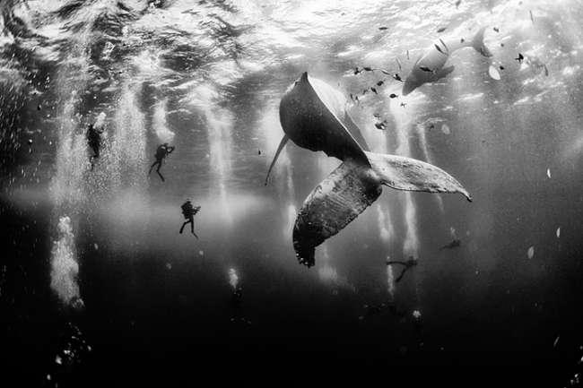 humpback-whale-national-geographic-pemenang 1